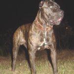 Obmedzenie chovu psov v SR