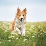 Užitočné doplnky pre psov, ktoré pravdepodobne ocení aj váš domáci miláčik